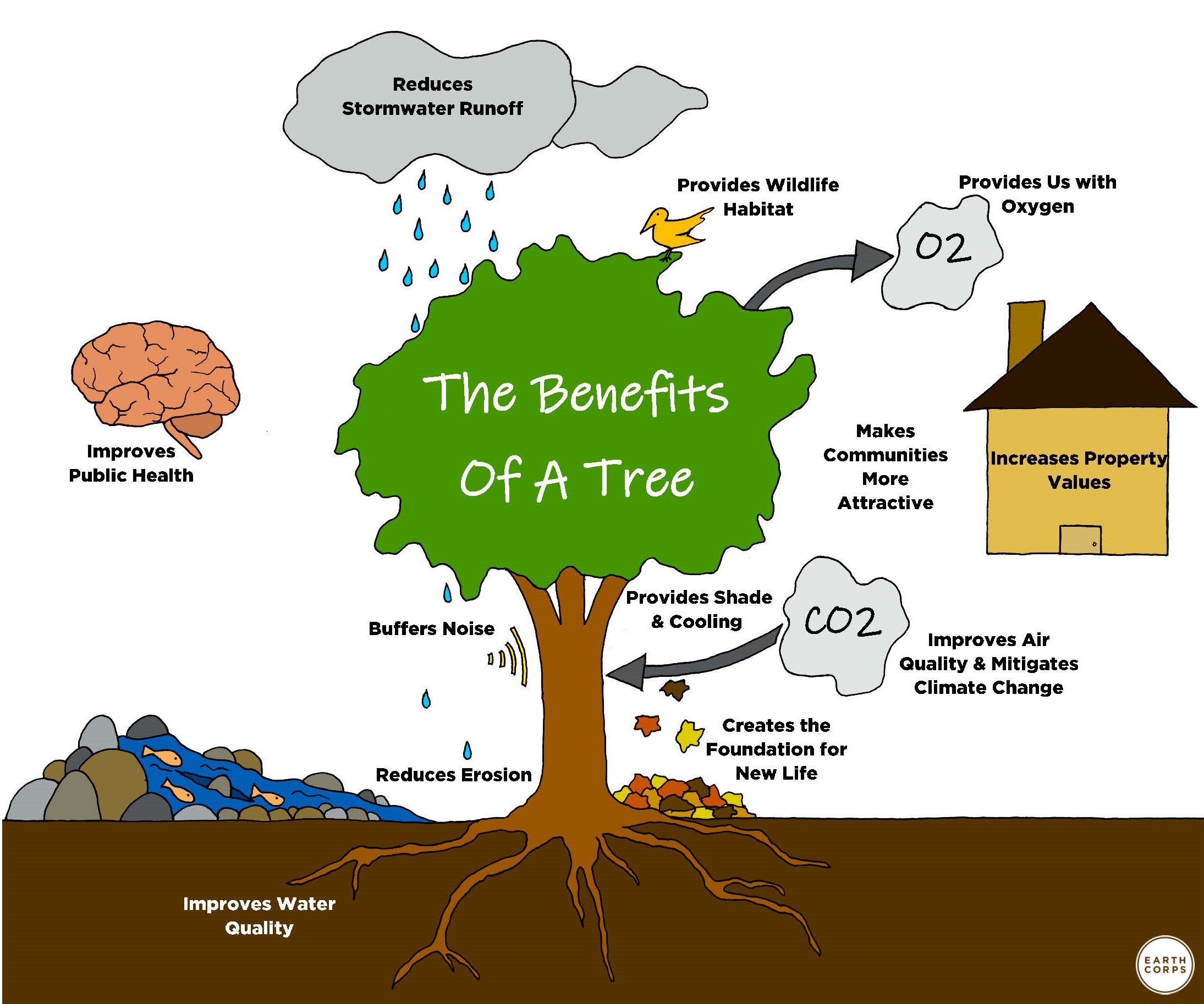 an image listing the benefits or trees