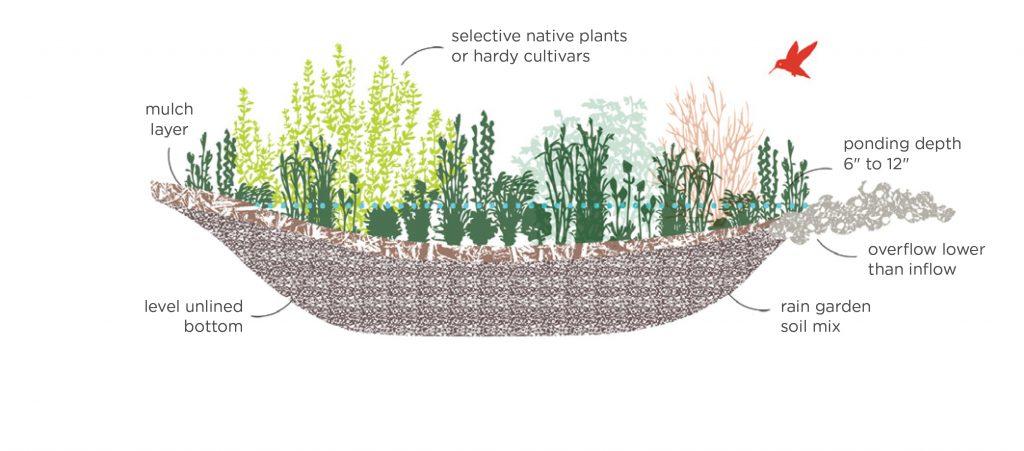 Rain Garden Diagram2